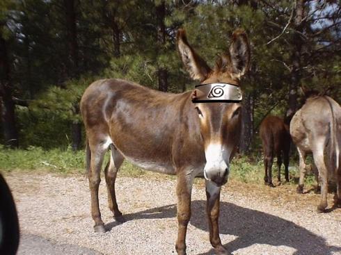 burro-otaku